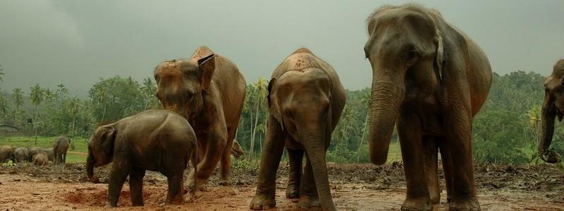 Фото: Шри-Ланка - путеводитель