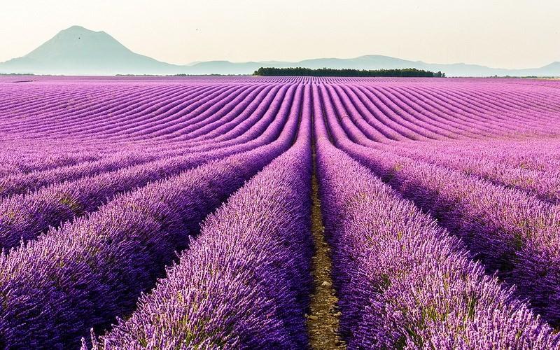 Фото: Прованс - Достопримечательности Франции: ТОП-16