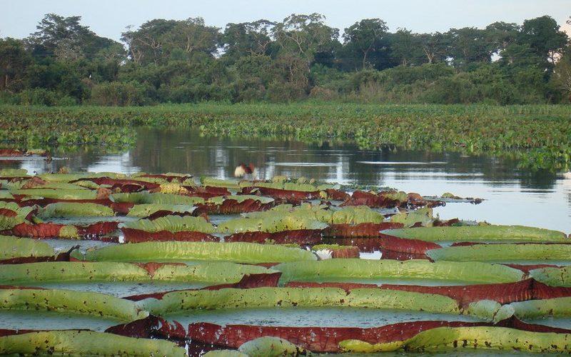 Фото: Болото Пантанал - Достопримечательности Бразилии: ТОП-14