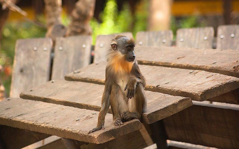 Фото: Зоопарк Барселоны
