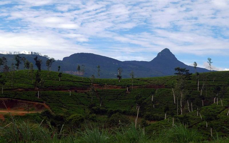 Фото: Пик Адама - Достопримечательности Шри-Ланки: ТОП-14