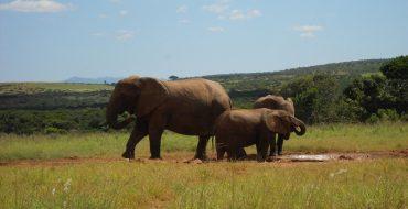 Фото: Достопримечательности ЮАР - ТОП-14