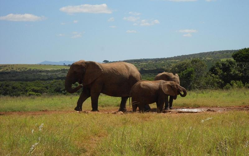 Фото: Национальный парк слонов Эддо - Достопримечательности ЮАР: ТОП-14