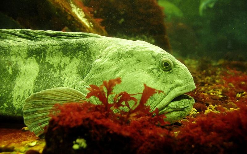 Фото: Бергенский аквариум - Достопримечательности Бергена: ТОП-10