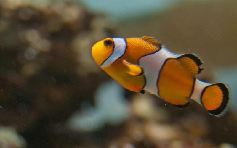 """Фото: Аквапарк """"Deep Sea World"""": Достопримечательности Эдинбурга: ТОП-10"""