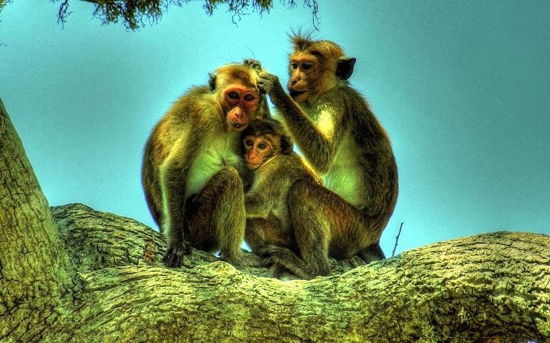 Фото: Национальный парк Бундала - Достопримечательности Шри-Ланки: ТОП-14