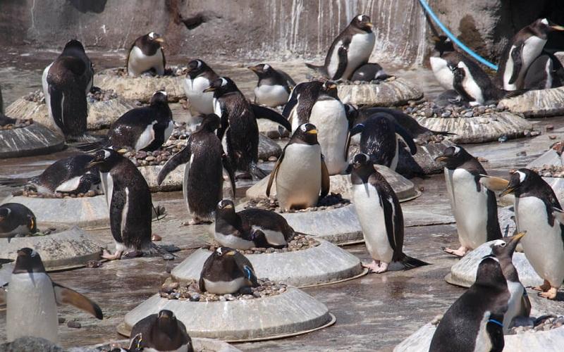 Фото: Эдинбургский зоопарк: Достопримечательности Эдинбурга: ТОП-10