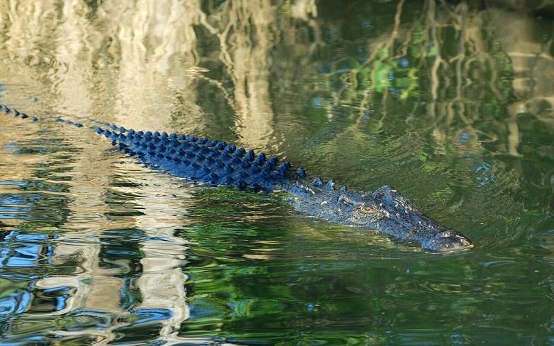 Фото: Национальный парк Какаду - Достопримечательности Австралии: ТОП-15