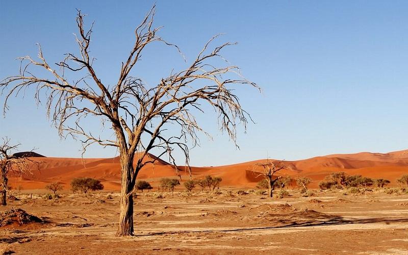 Фото: Пустыня Калахари - Достопримечательности ЮАР: ТОП-14