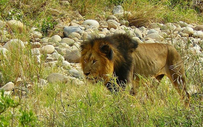 Фото: Национальный парк Крюгера - Достопримечательности ЮАР: ТОП-14