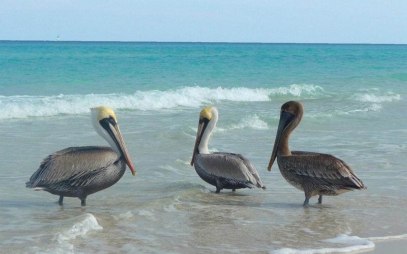 Фото: Остров Ларго-дель-Сур - Достопримечательности Кубы: ТОП-13