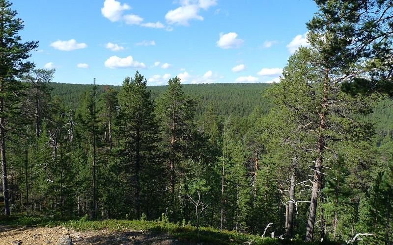Фото: Национальный парк Лемменйоки - Достопримечательности Финляндии: ТОП-10