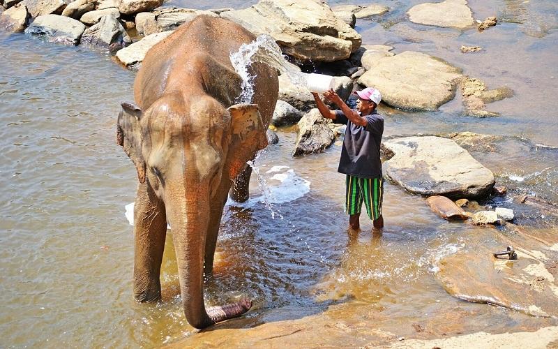 Фото: Приют для слонов Пиннавелла - Достопримечательности Шри-Ланки: ТОП-14