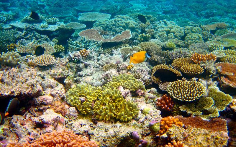 Фото: Большой Барьерный риф - Достопримечательности Австралии: ТОП-15