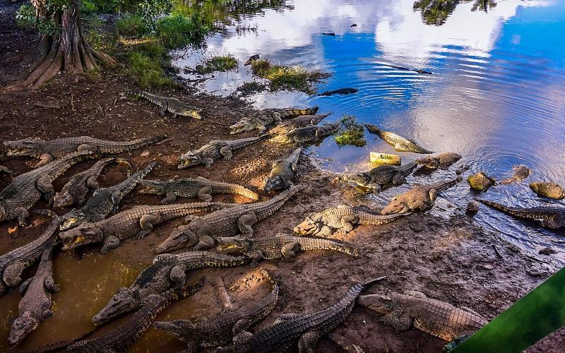 Фото: Полуостров Сапата - Достопримечательности Кубы: ТОП-13