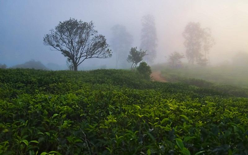 Фото: Национальный парк Синхараджа - Достопримечательности Шри-Ланки: ТОП-14