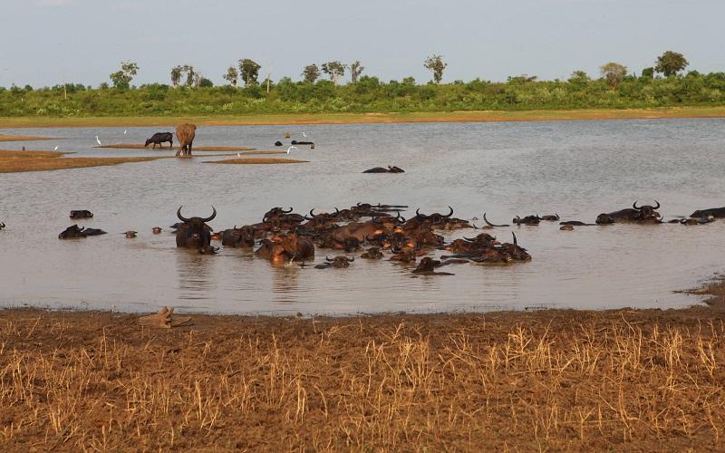 Фото: Национальный парк Уда-Валаве - Достопримечательности Шри-Ланки: ТОП-1