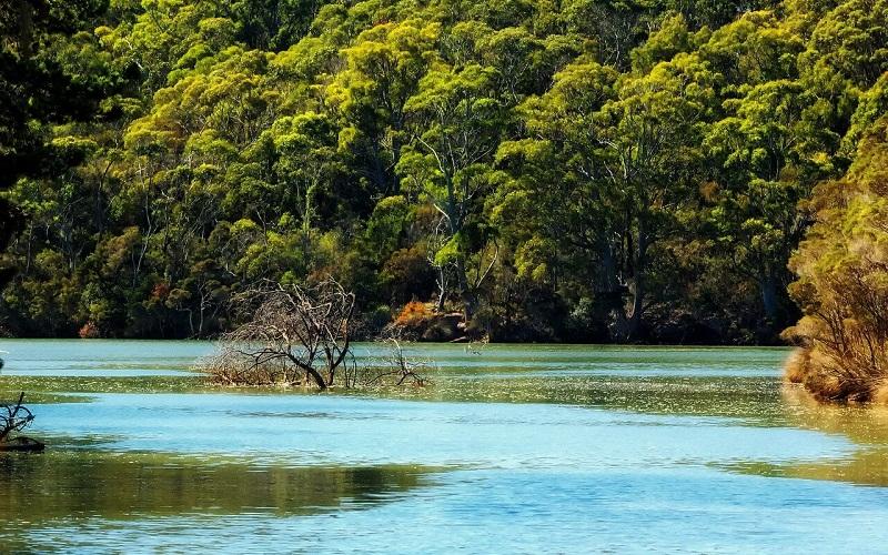 Фото: Остров Тасмания - Достопримечательности Австралии: ТОП-15
