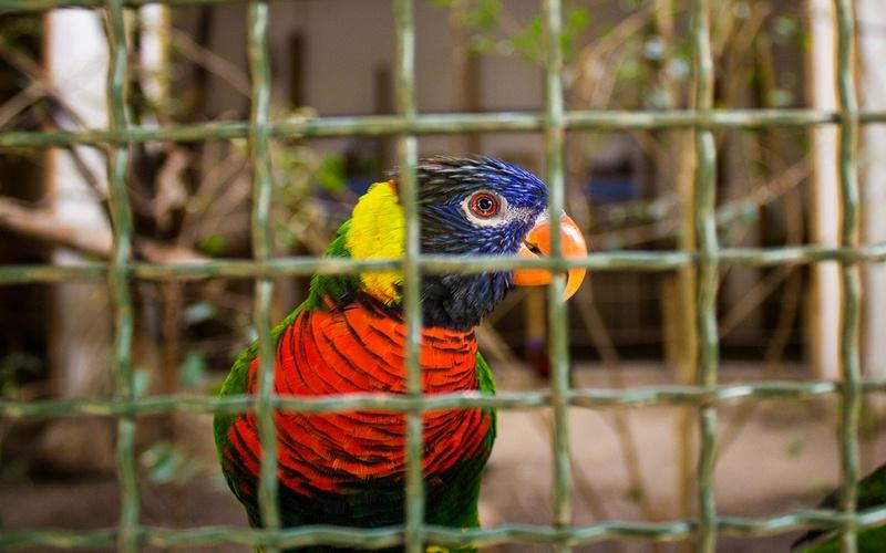 Фото: Зоопарк - Достопримечательности Будапешта: ТОП-10