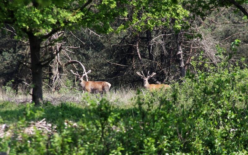 Фото: Национальный парк Велювезом - Достопримечательности Нидерландов: ТОП-10