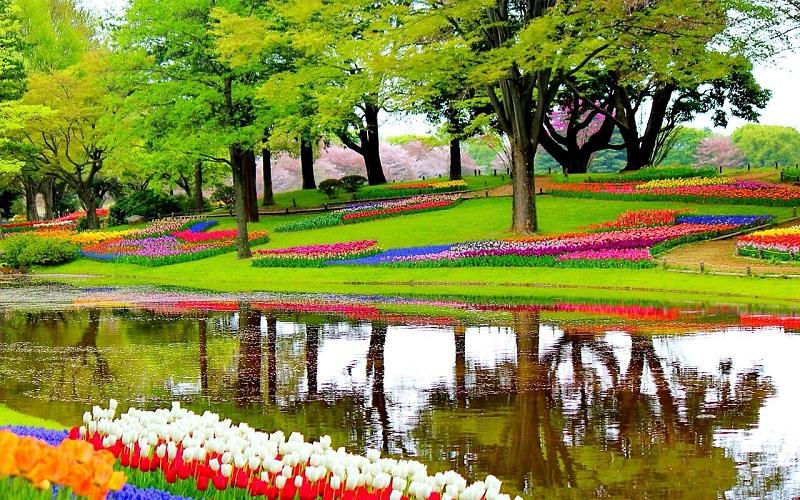 Фото: Королевский парк цветов Кекенхоф - Достопримечательности Нидерландов: ТОП-10