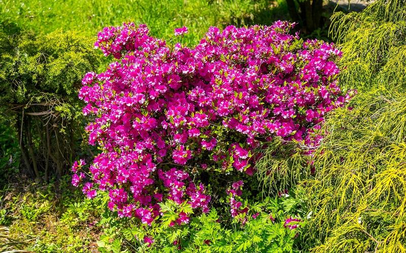 Фото: Батумский ботанический сад - Достопримечательности Батуми: ТОП-9
