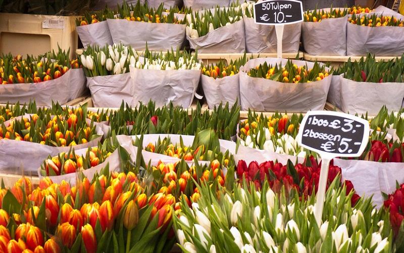 Фото: Цветочный рынок - Достопримечательности Амстердама: ТОП-11
