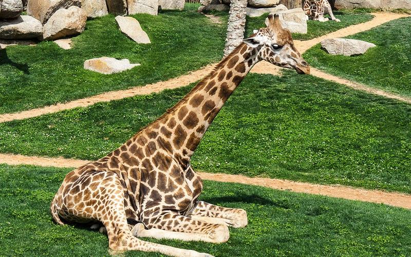 Фото: Биопарк - Достопримечательности Валенсии: ТОП-10