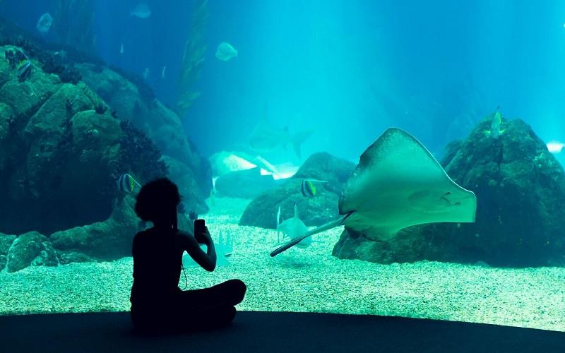 Фото: Лиссабонский океанариум - Достопримечательности Лиссабона: ТОП-10
