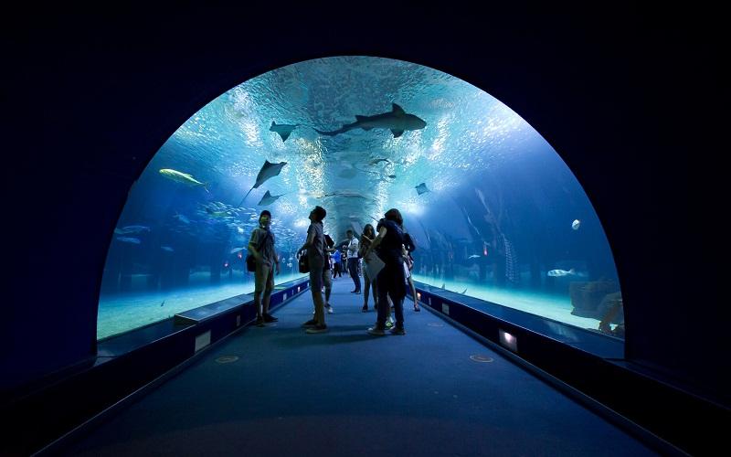 Фото: Океанографический парк - Достопримечательности Валенсии: ТОП-10