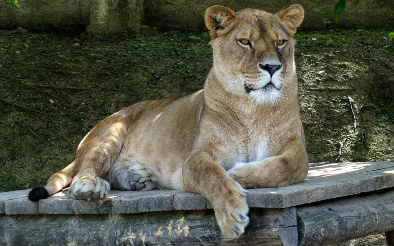 Фото: Кошицкий зоопарк - Достопримечательности Кошице: ТОП-10