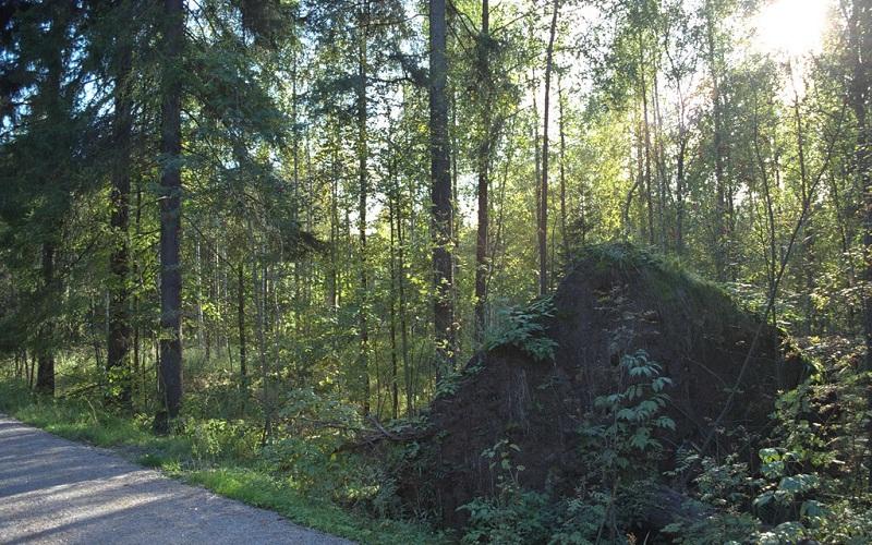 Фото: Центральный парк Кескуспуйсто - Достопримечательности Хельсинки: ТОП-10