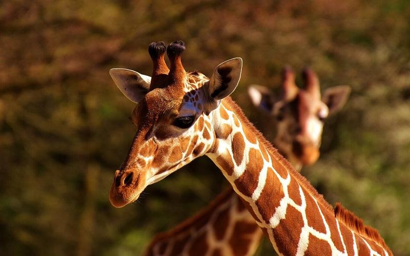 Фото: Зоопарк Хеллабрунн - Достопримечательности Мюнхена: ТОП-10