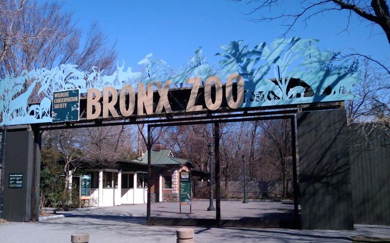 Фото: Бронкский зоопарк - Достопримечательности Нью-Йорка: ТОП-15
