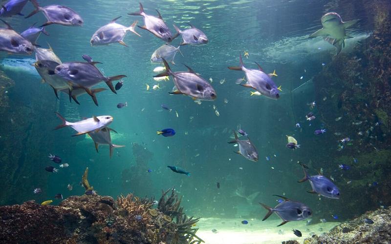 Фото: Сиднейский аквариум - Достопримечательности Сиднея: ТОП-17