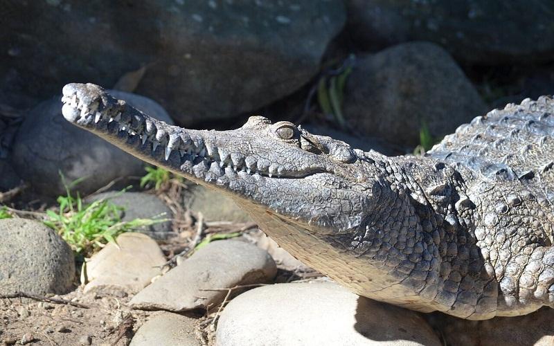 Фото: Зоопарк Таронга - Достопримечательности Сиднея: ТОП-17
