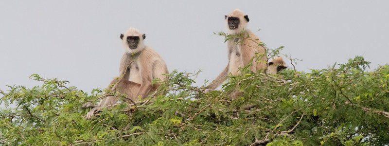 Фото: Национальный парк Бундала, Шри-Ланка - обзор, как добраться, лайфхаки