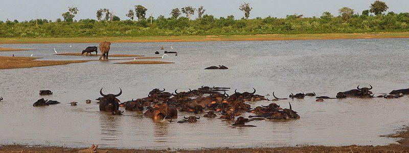 Фото: Национальный парк Уда-Валаве, Шри-Ланка - обзор, как добраться, лайфхаки