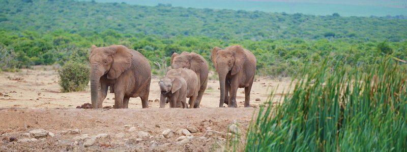 Фото: Национальный парк слонов Эддо, ЮАР - обзор, лайфхаки