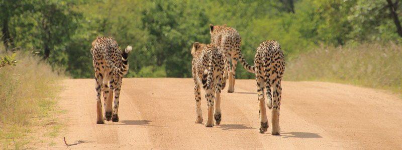Фото: Национальный парк Крюгера, ЮАР - обзор, лайфхаки