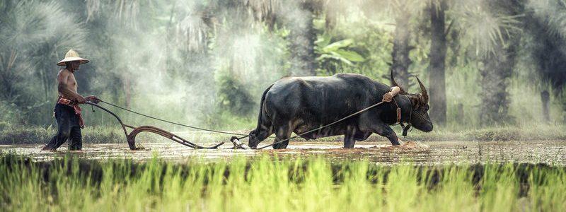 Фото: Лаос - путеводитель, лайфхаки