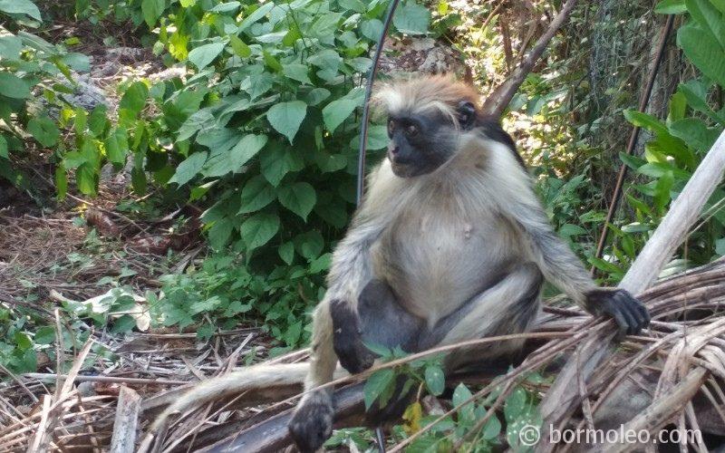 Фото: Лес Джозани, Занзибар - обезьяны и мангровые леса