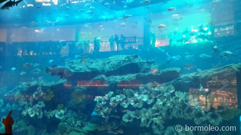 Фото: Дубай Молл (Dubai Mall)